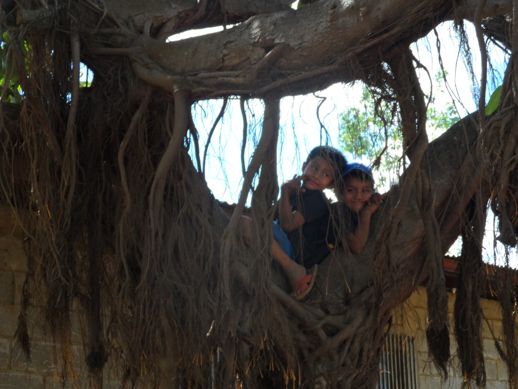 A couple of Nicaraguan kids up in a tree.